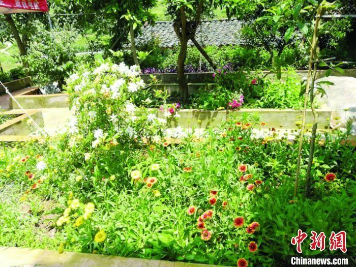 """重庆万州龙沙镇:""""一把扫帚""""扫靓美丽乡村"""