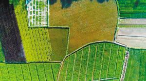 平均亩产近千斤 盐碱地里稻花香