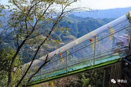 疯抢!神农山门票+往返索道+玻璃桥+挑战桥等十大游玩项目随心玩!超值!