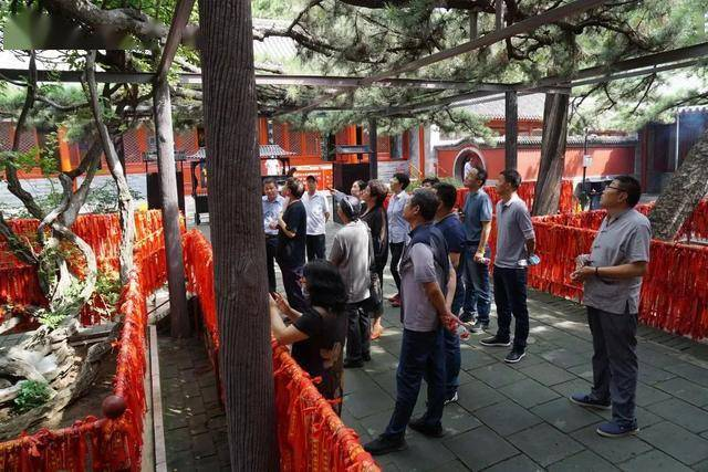 红螺寺古树保护项目完成中期专家考评