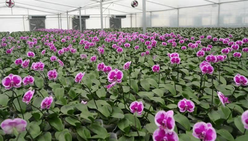 前锋镇长江新村的益农兰花种植基地的组培室