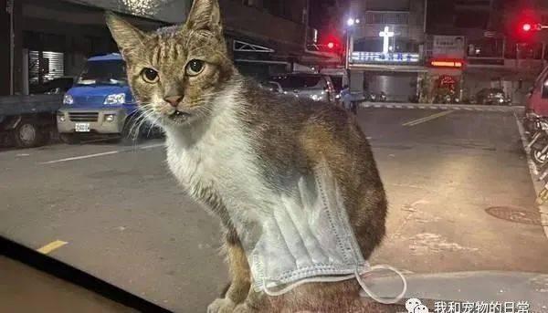 刚停好车就被霸气猫拦截,看来是被钦点的奴才!