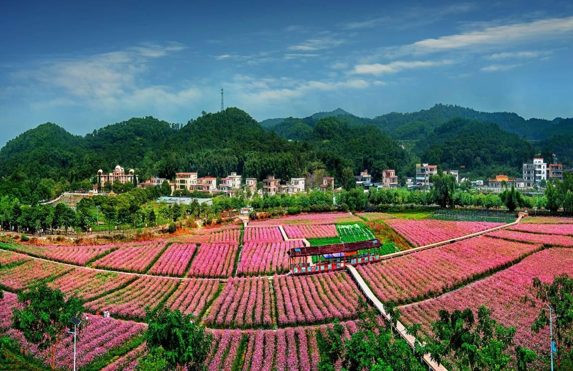 花都大力发展都市现代农业,去年农业高速增长10.4 %
