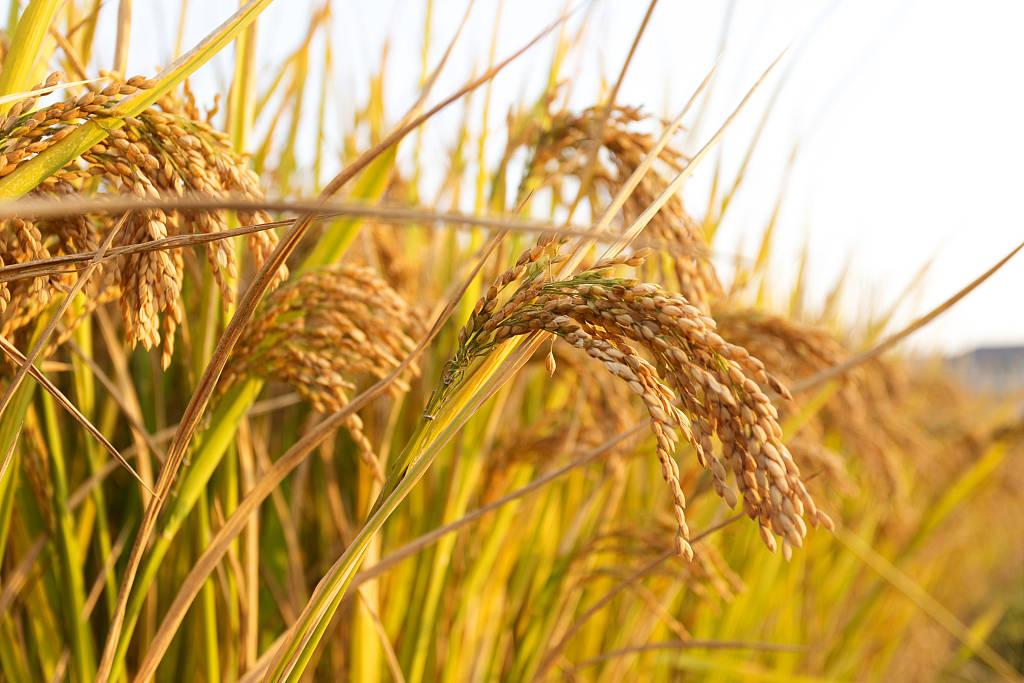 加大力度发展农业生产托管
