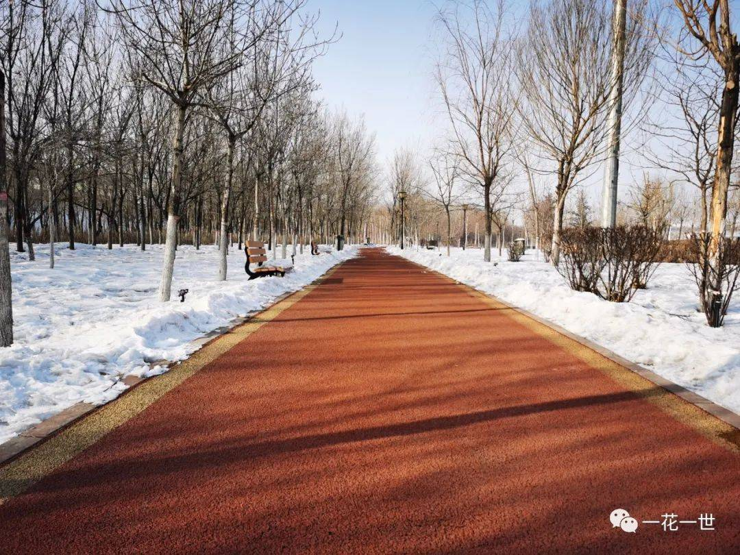【龙七七2021.元.24】叫风景跑到你眼睛里头来——开始跑步