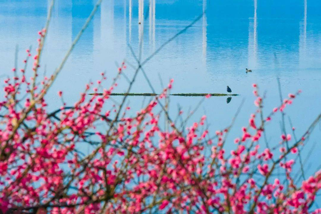太美了!橘子洲上鲜花盛开!还有松雅湖、望月公园…错过再等一年!(大量美图)