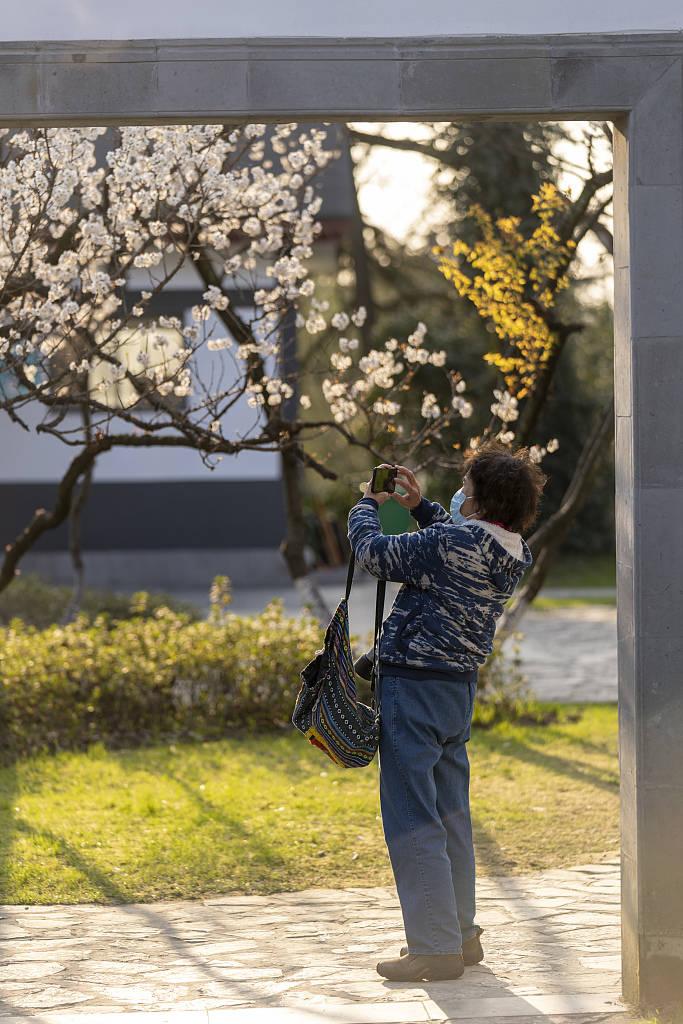 南京玄武湖公园樱桃花渐次盛开 市民花香中乐享春光