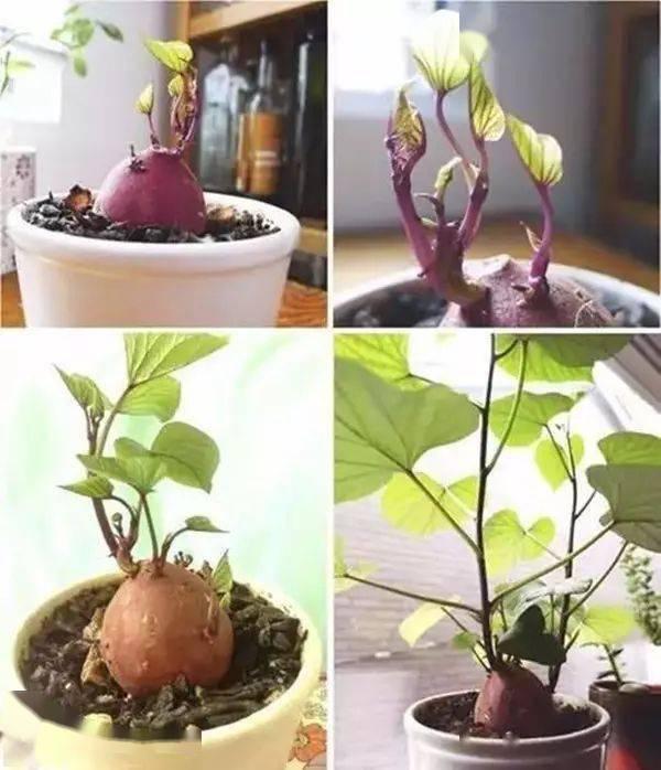 养花难还费心思,不如试试养蔬菜?好看又有新意!