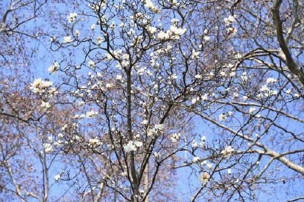 春天在哪里?西湖春色美如画