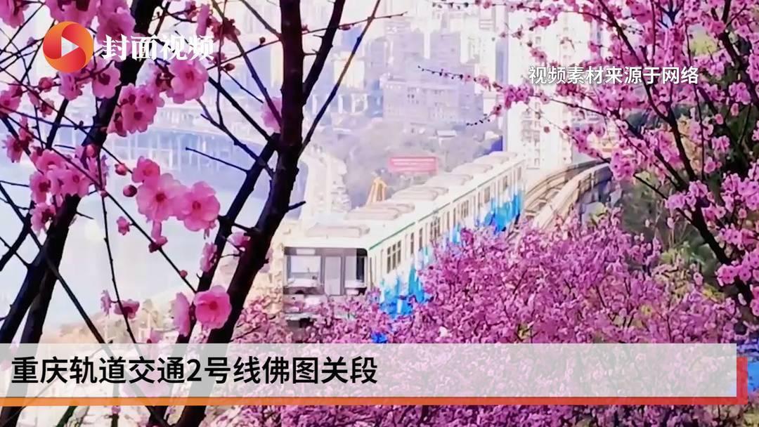 这趟列车穿越花海抵达春天,你爱上它了吗?