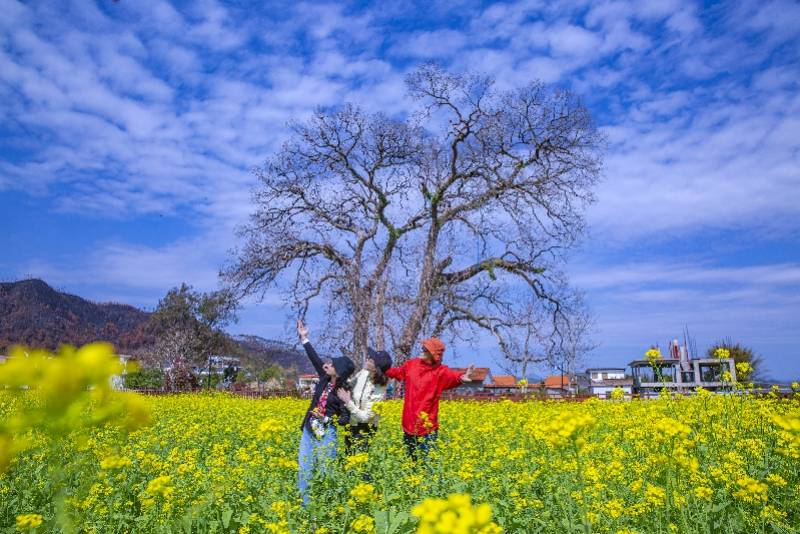 二月广东热成初夏,多地最高气温破30℃ ,元宵节前或降雨