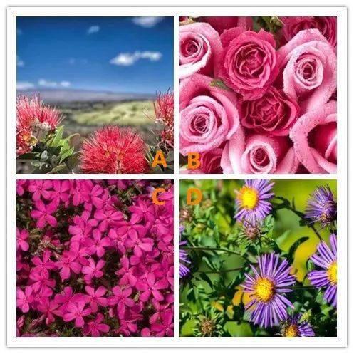 最符合你气质的是哪种花?测骨子里的你是什么样的