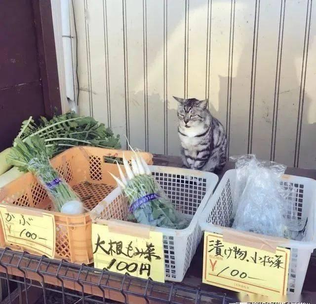 猫老板在摊贩上大翻白眼,脸上充满怒气:本喵的东西还不买?