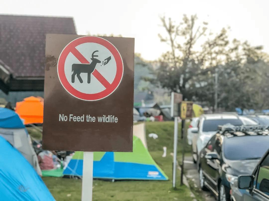 游客投喂,终于把动物喂死了