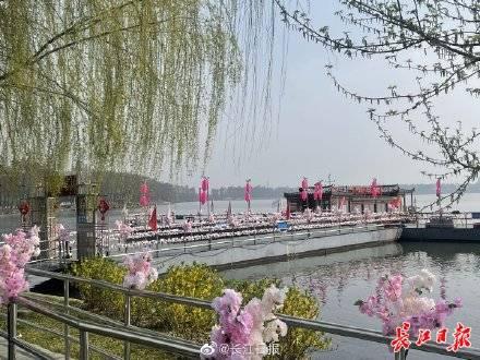 """武汉东湖赏樱旅游专线来啦,还有""""花花游园会""""喊你玩"""