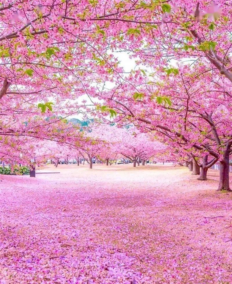 生活万岁:三月,相约在最美的春光里 网络快讯 第1张