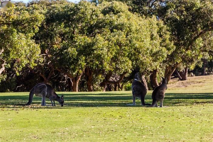 """13个物种宣布灭绝!澳大利亚成""""世界哺乳动物灭绝之都"""""""