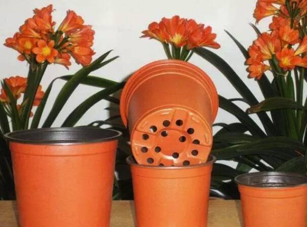 养花时怎样选择花盆的大小和深浅?教你在养花