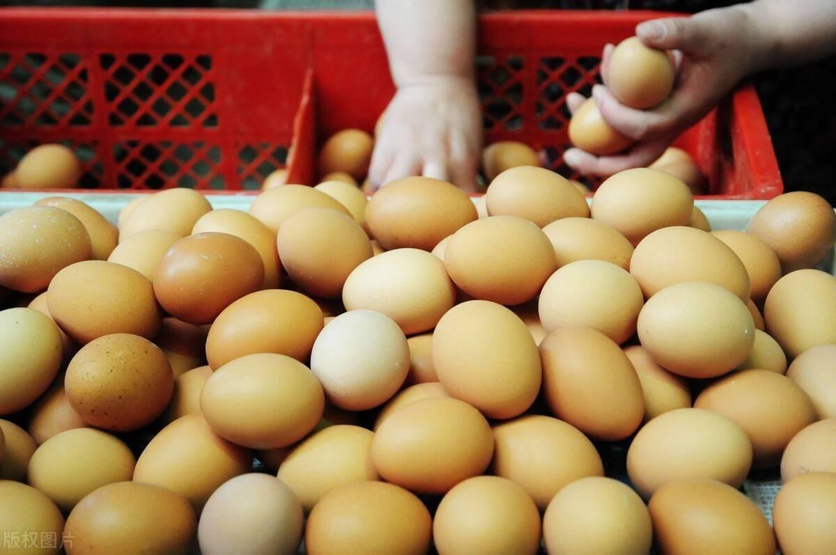 河南鸡蛋价格最新行情 今日河南鸡蛋最新价格