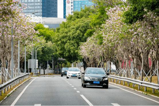 为何今年深圳花开延绵数公里,出门就能赏花?背后的故事带你看看!