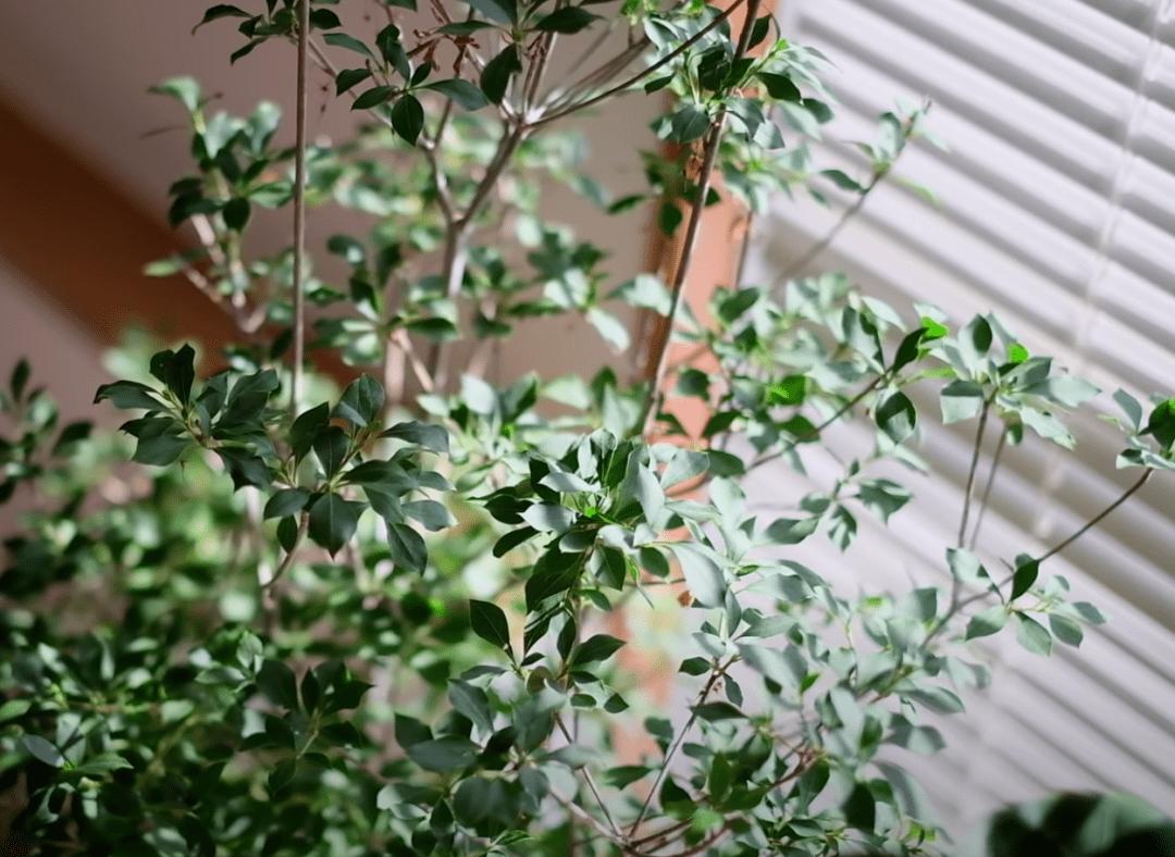 春天了,该聊聊万能软 装单品绿植了,一起来看