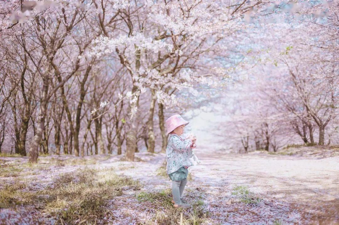 美过日本,不输武汉,全球最大的樱花基地竟在中国,还免费! (图9)