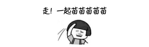 "云南人!走,""一起苗苗苗苗苗""!"