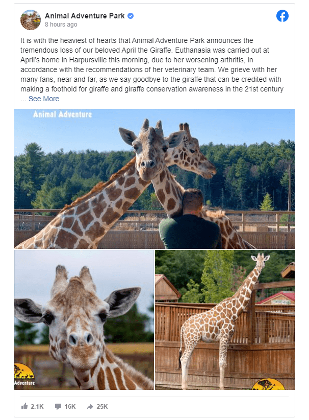在2017年备受关注的直播中分娩的长颈鹿April已经去世