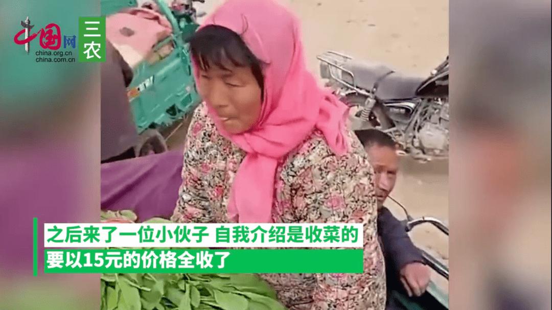 农民卖菠菜,1300斤15元,菜贩:行情就这样,没办法  第2张