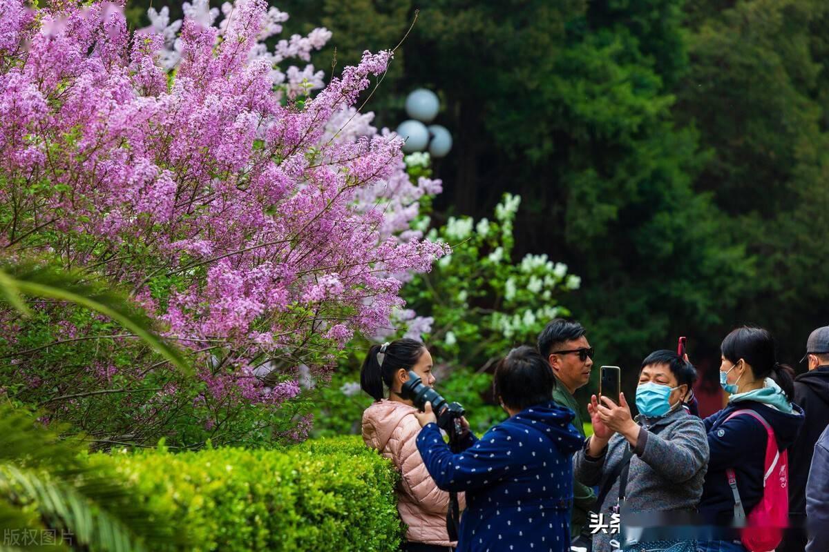 北京中山公园:鲜花怒放市民游园赏花