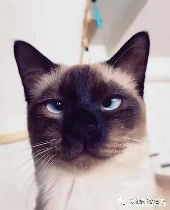 受虐猫康复后大走钟,这极大的反差让妈妈超崩溃!