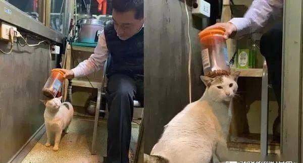 流浪猫渐渐被警卫伯伯收编,一天有三个警卫伯伯轮番喂食!