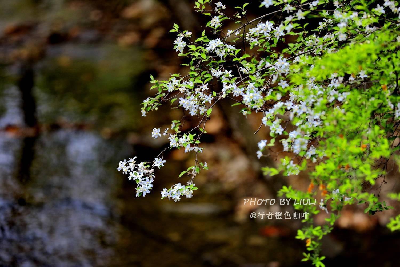 北京密云清凉谷 趣赏春天最美的山水