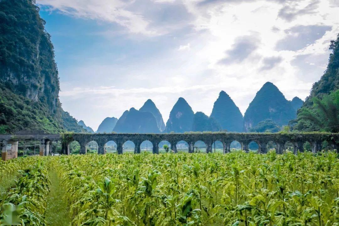 6月旅行地推荐!国内12个初夏限定风景,即将美上热搜!