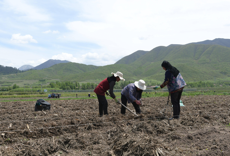 农民在田里耕地的描写 描写农民耕地的场景