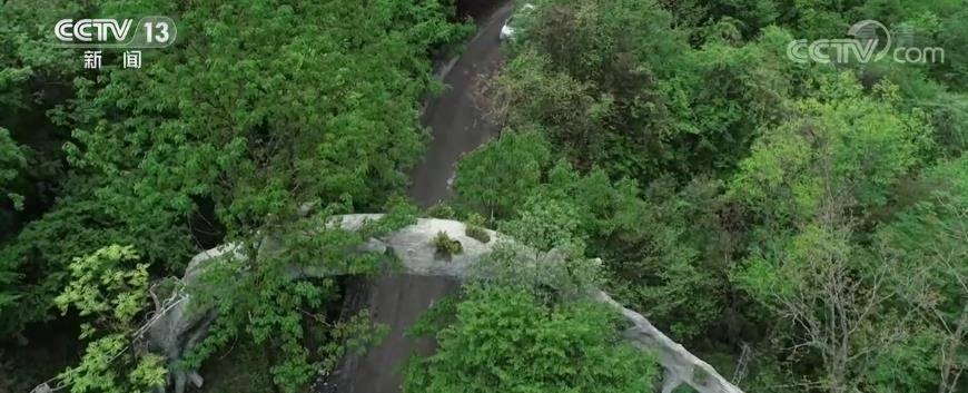 """神农架国家公园建设生态廊道 构建连通人与自然和谐的""""生命通道"""""""