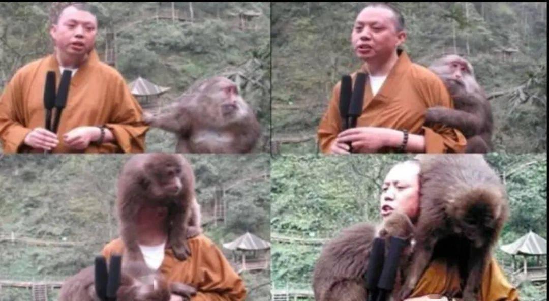 有多少游客被峨眉山的猴子亲过脸?