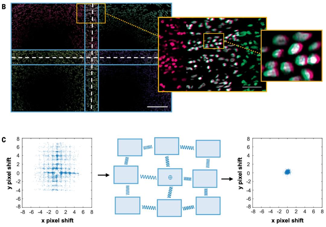 《科学》:用看星星的方式看肿瘤!霍普金斯大学科学家用天文成像分析技术研究肿瘤切片