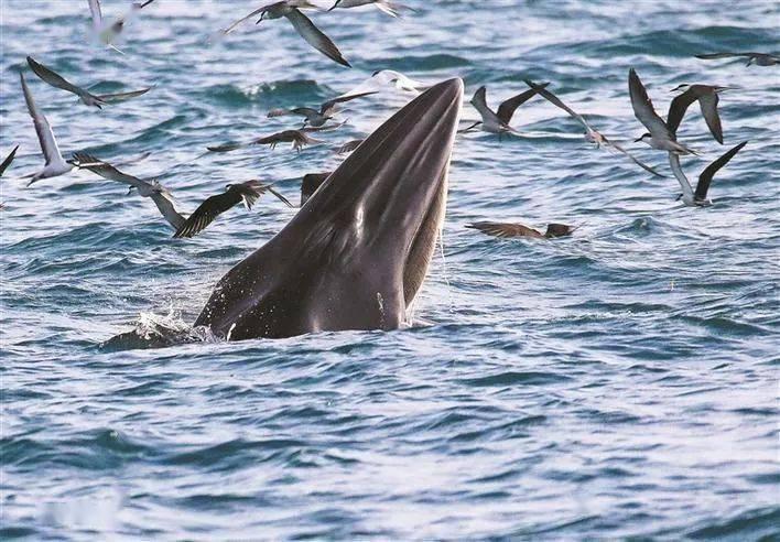 """深圳湾""""布氏鲸""""的真实身份信息首次公开!环境DNA技术揭开神秘面纱"""