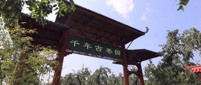 """【喜迎丰收节】定了!2021年""""中国农民丰收节""""河南安阳·内黄分会场明日开幕"""