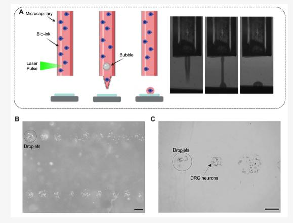 3D打印活脑细胞成功进行 生物打印的一大步!