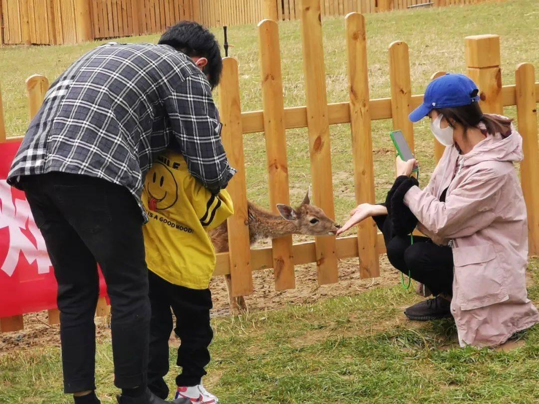 兰州野生动物园试营业首日迎来近3000游客