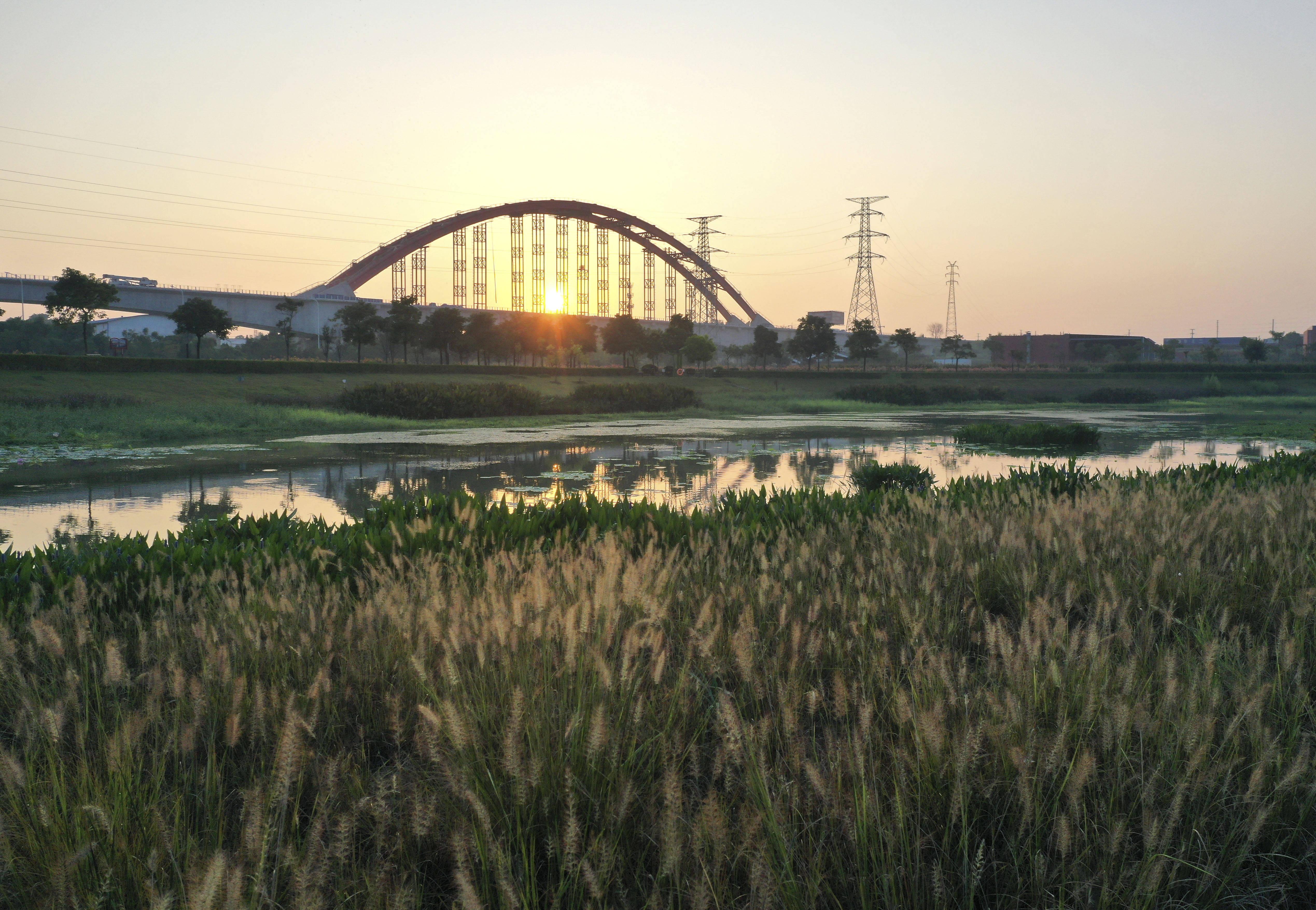 江南清晨湿地美