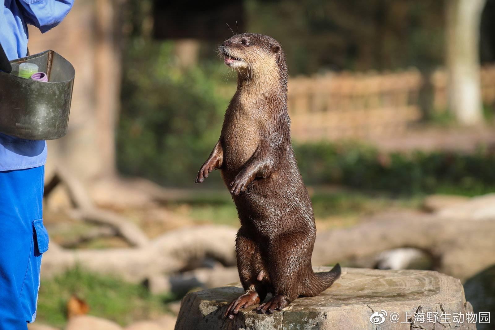 """恒宏首页上海动物园一水獭帮游客水池捞手机,获赠锦旗:""""拾金不昧暖人心"""" (图7)"""